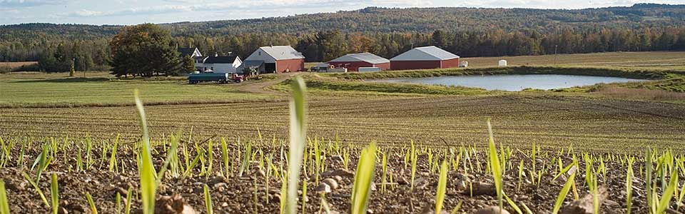 Agricultural Conservation Easements