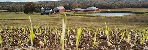 About Agricultural Conservation Easements