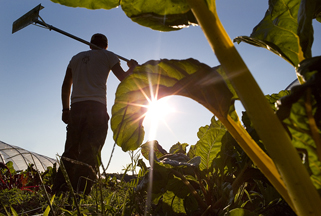 USDA Farming Census: Maine Has More Young Farmers, More Land In Farms