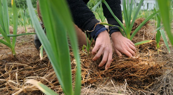 Hunger Relief Groups Turn To Farms For Fresh, Local Donations