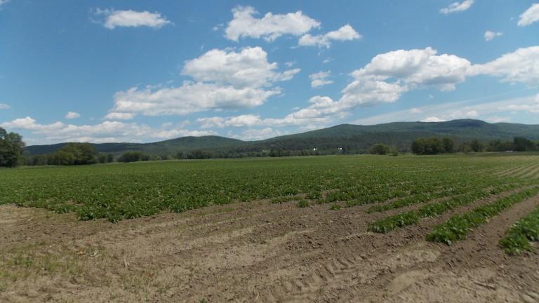 Historic Farm In Bethel Will Remain A Farm For The Future