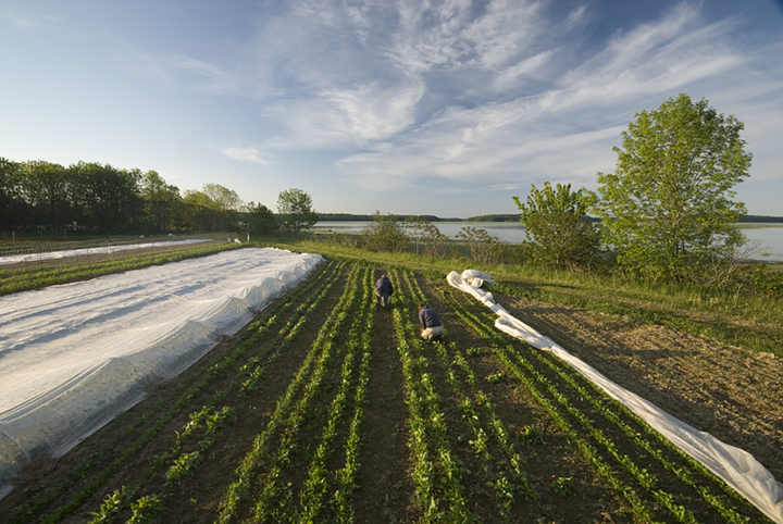 Senate Agriculture Committee Farm Bill Draft Is Mostly A Win For Maine Farmers