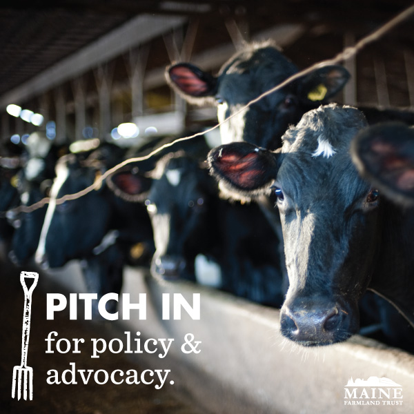 PITCH IN For Policy & Advocacy