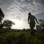 Our Priorities for the Final Farm Bill