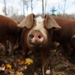 Four ways to support Maine farms right now
