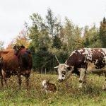Farm Fresh Experiences