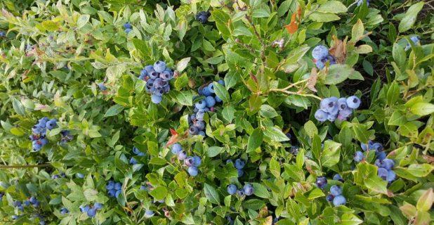 September Harvest