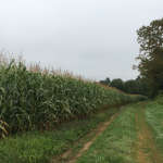 530+ acres of farmland protected in October