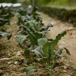 Maine Soil Health Network