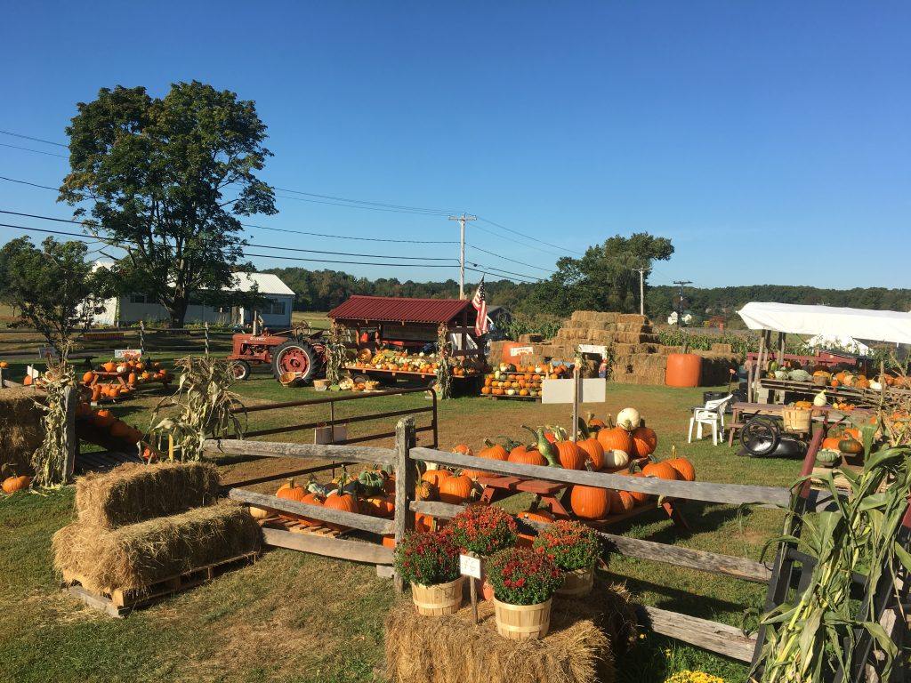 Pumpkin stand at Blaisdell Brothers Family Farm